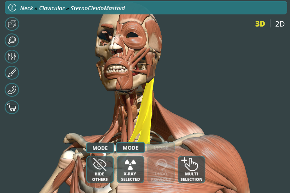 Visual Anatomy 3d Human Graphicvizion